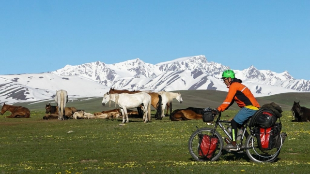Hanging out with horses in Kyrgyzstan.