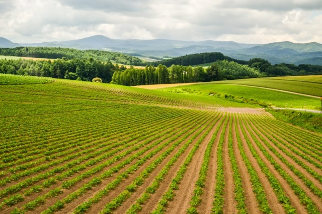 Japanese farm, Hokkaido